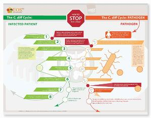 How_to_Stop_the_Cdiff_Cycle